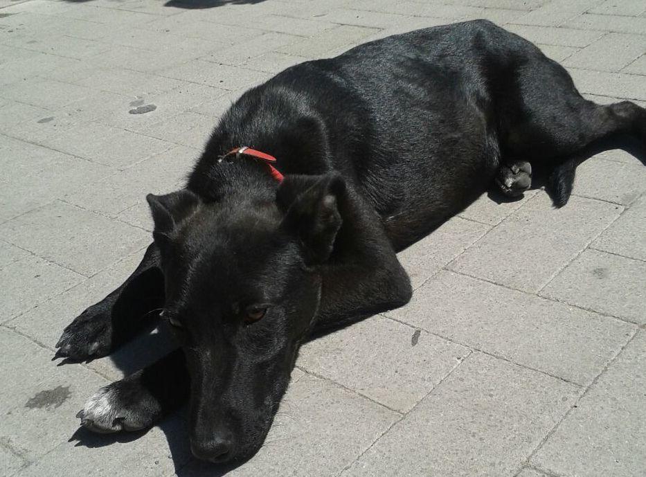Investito in piazza Santa Barbara, soccorso dai Cuccioli dell'Etna