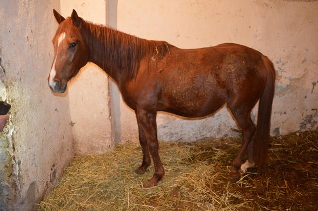 CATANIA: Trovati in un edificio vestiti rubati e un cavallo maltrattato